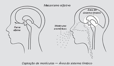 Pinetonina - Mecanismo Alfativa