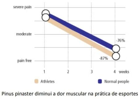 Pycnogenol - Dor Muscular